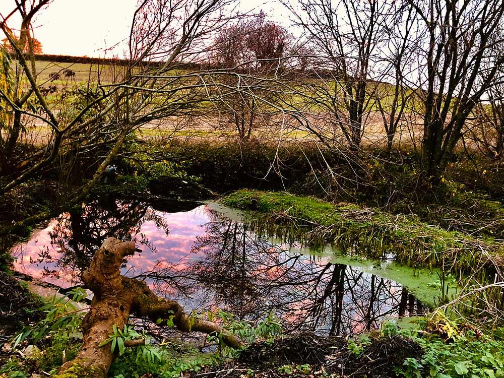 1Pitt-Pond